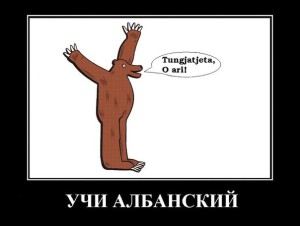 Медвед: учи албанский!