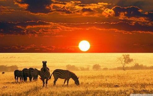 Африкаанс — иллюстрация